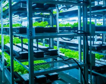 Cámaras de cultivo